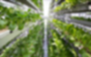Singapore_Urban_Farming (1).png