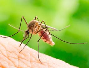 dengue-outbreaks.jpg