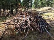 Wood pile 2.jpg