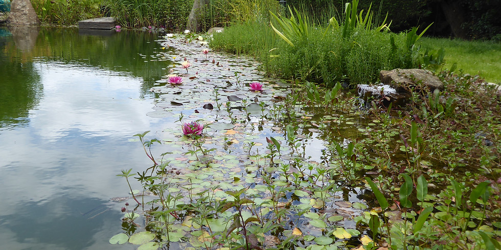Discover life in our Freshwater Habitats - Event Cancelled