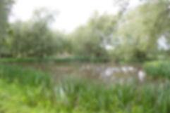 41 IMG_3569 The Pond White Place Farm.jp