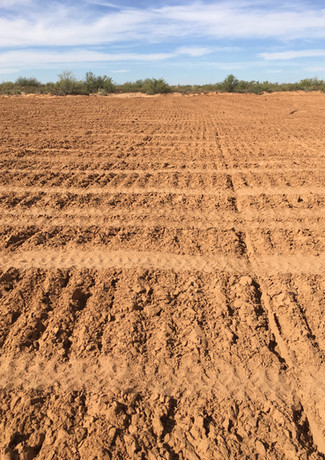Reseeding Remediation Project