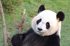 Huan-Huan-header-1024x683.jpg