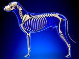 Orthopädische Untersuchung bei Hund , Katze , Heimtier