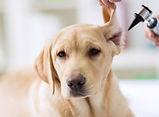 Untersuchung der Haut bei Hund , Katze , Heimtier