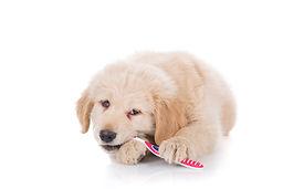 Zähne putzen beim Hund ;  Zahn Prophylaxe , Tierarzt Stuttgart Botnang