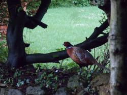 wildlife in the garden