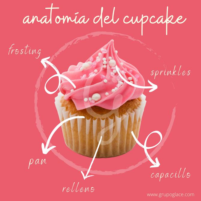 Anatomía del cupcake