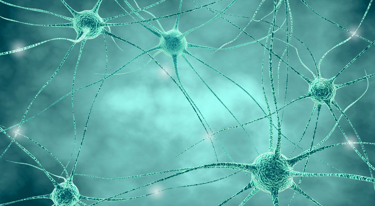 Neurons.png