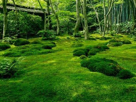 India's First Moss Garden.