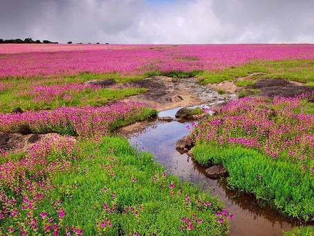 Valley Of Flowers in Maharashtra