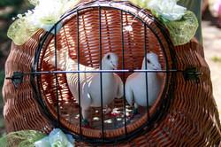 Svatba vypouštění holubů