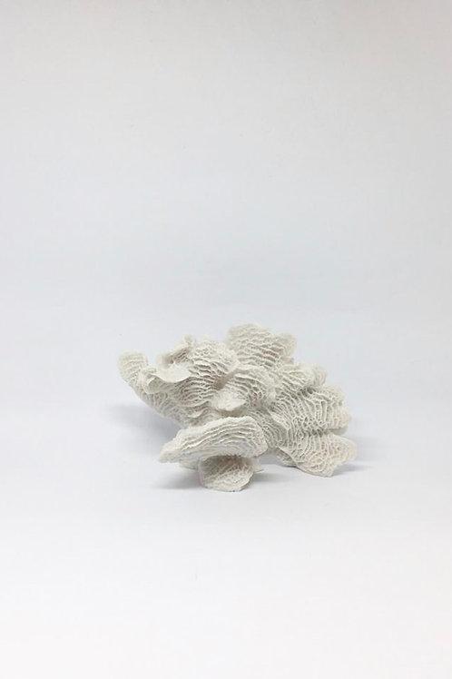 Coral branco