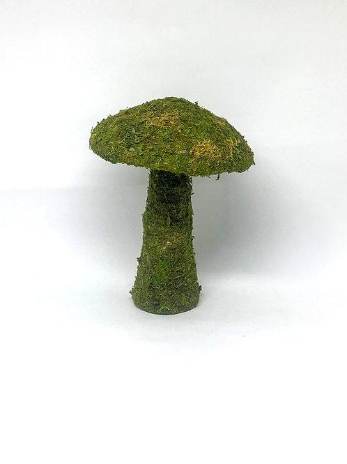 Cogumelo grama
