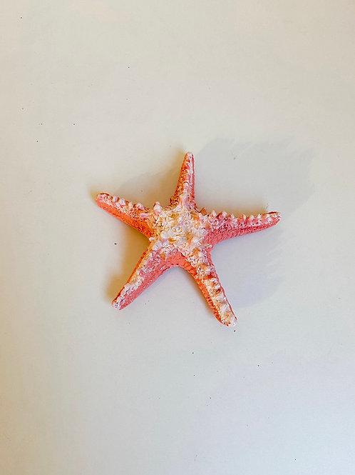 Estrela do mar coral