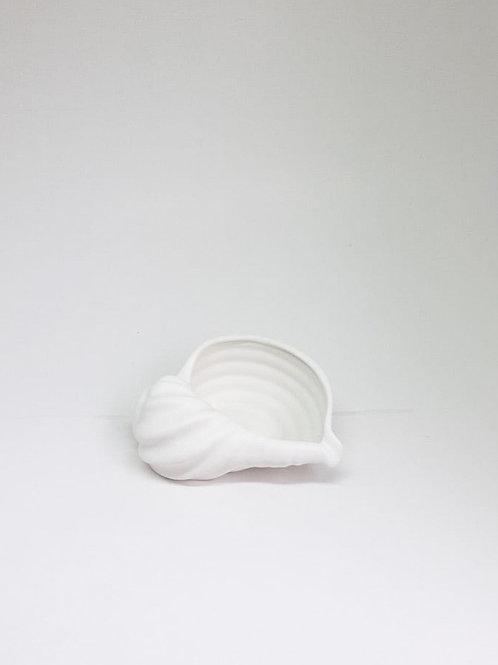 Concha aberta branca