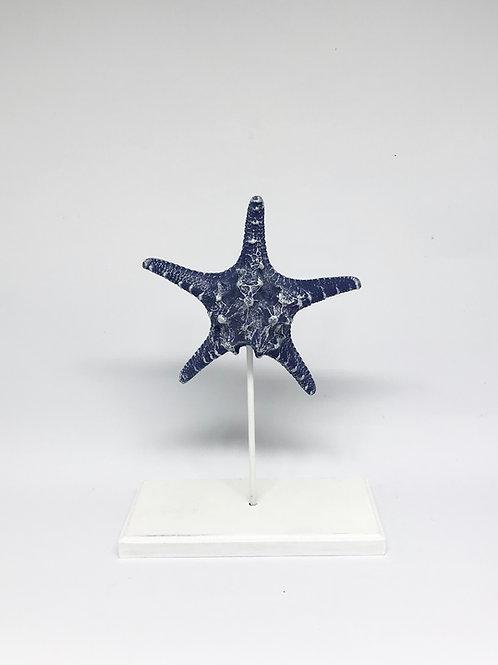 Estrela do mar pedestal