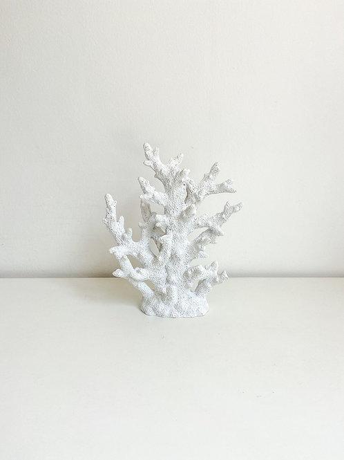 Coral alto branco