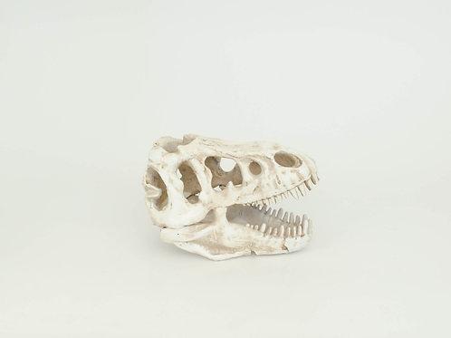 Crânio de Dinossauro
