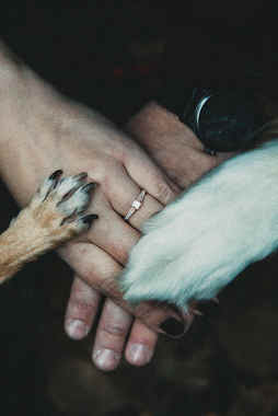 wedding ring with pet dogs