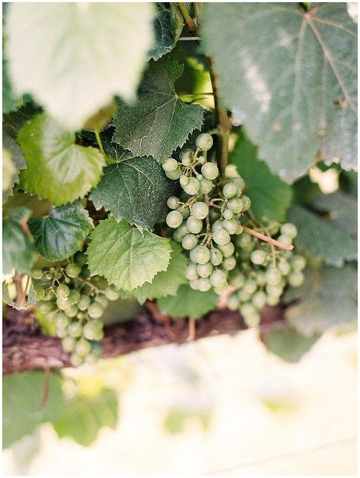 Lauren & Holden | Montaluce Winery Dahlo