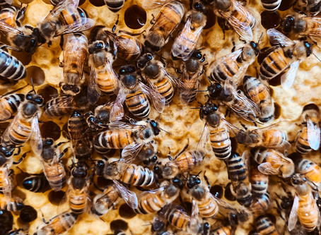 Bee Notes - Thursday May 14, 2020