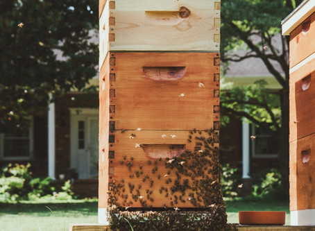 Bee Notes - July 20, 2020