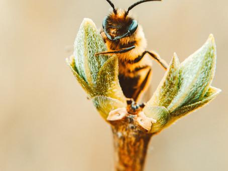 Bees Update