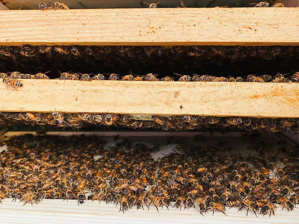 Inside a bee hive