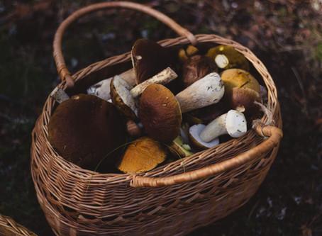 Mushroom Dreams