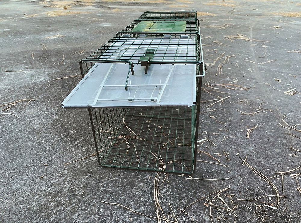 humane catch release live animal trap wire pest
