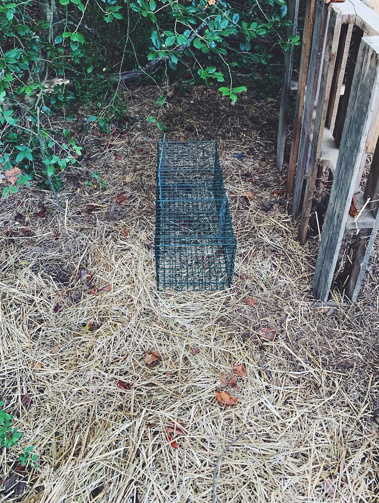 live animal trap woods catch wire cage