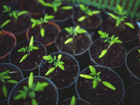 Why grow a garden?