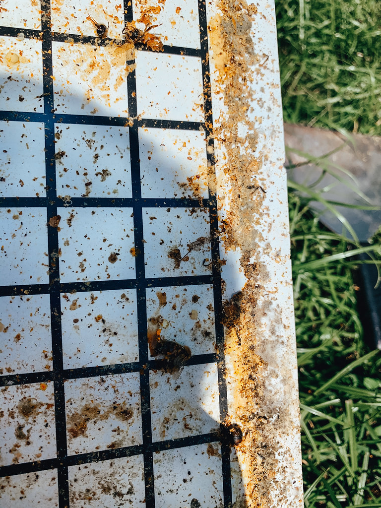 debris on the bee hive inspection board