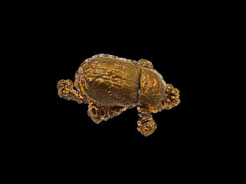 Female Coconut Rhinocerous Beetle