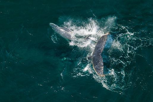 Whales Kingy 20 Sep 19 (51).jpg