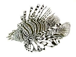 Lionfish (Bermuda)