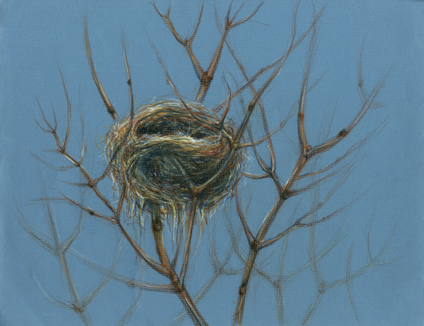 Nest in Branches