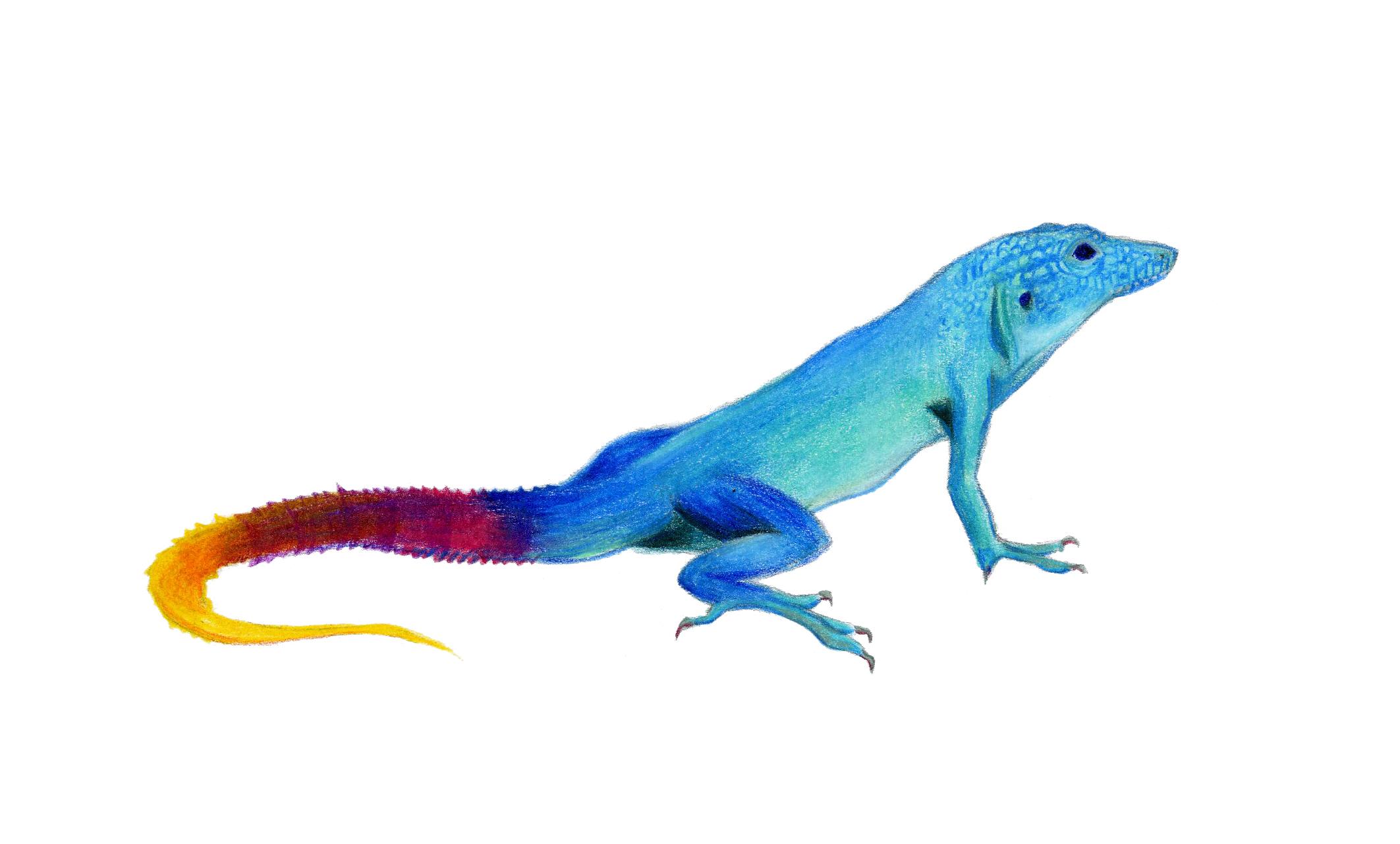 Jamaican Anole Lizard