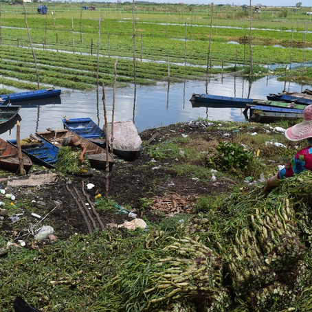 Destruction of critical urban wetland risks the end of urban farming and wastewater treatment