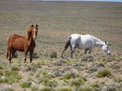 Tolle Pferde