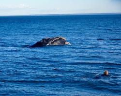 Wal und Michel auf Tuchfühlung