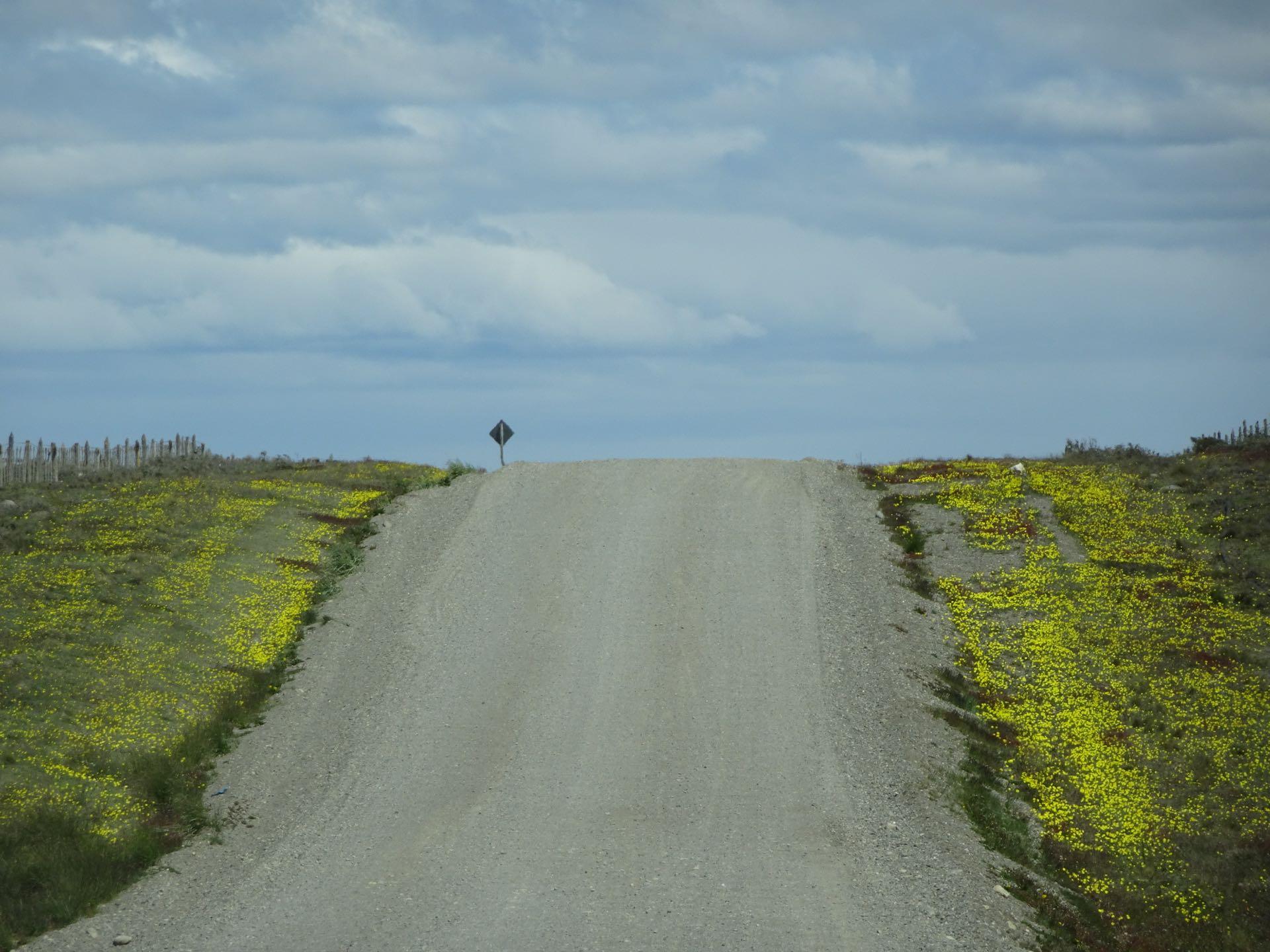 Blühende Pampa