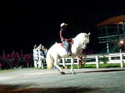 Pferdedressur