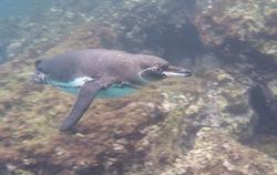 ...noch ein Pingu