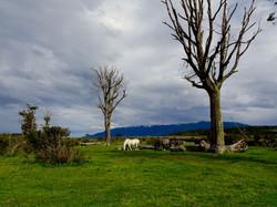 Pferde der Estancia Harberton