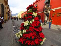 Weihnachtsbäume in Oaxaca