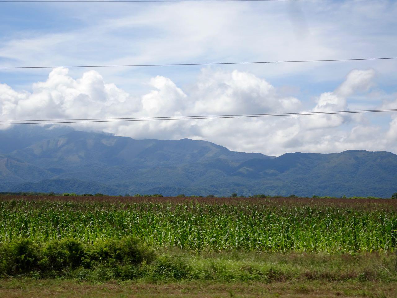 Maisfelder unterwegs