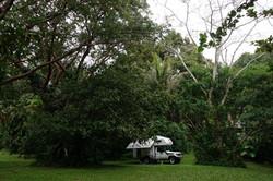 Schöner Platz im Dschungel