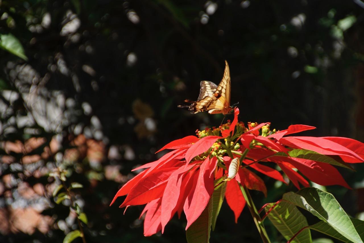 im Garten des Casitas